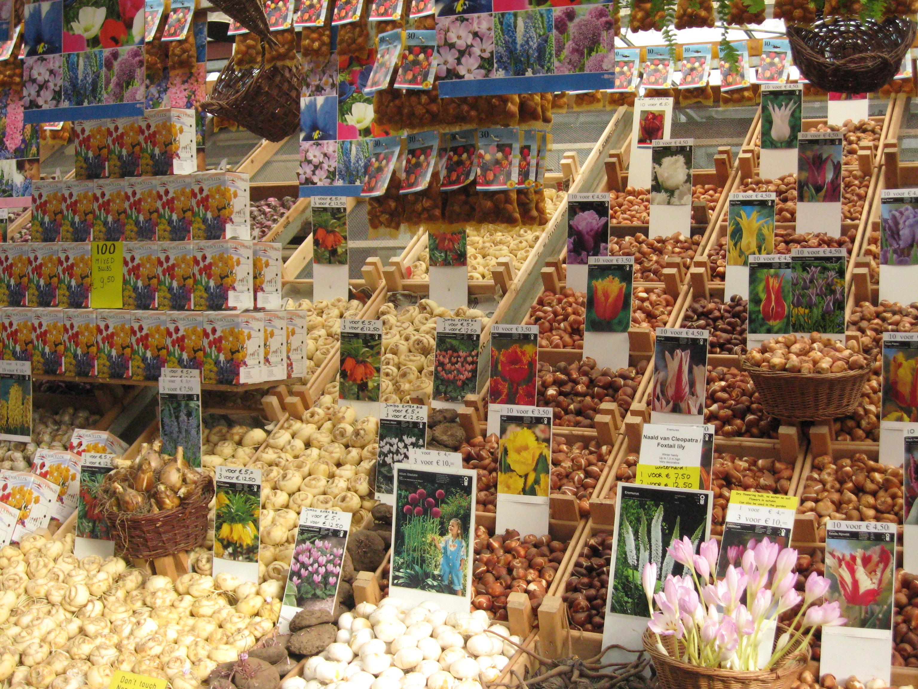 Image result for Bulb-Market