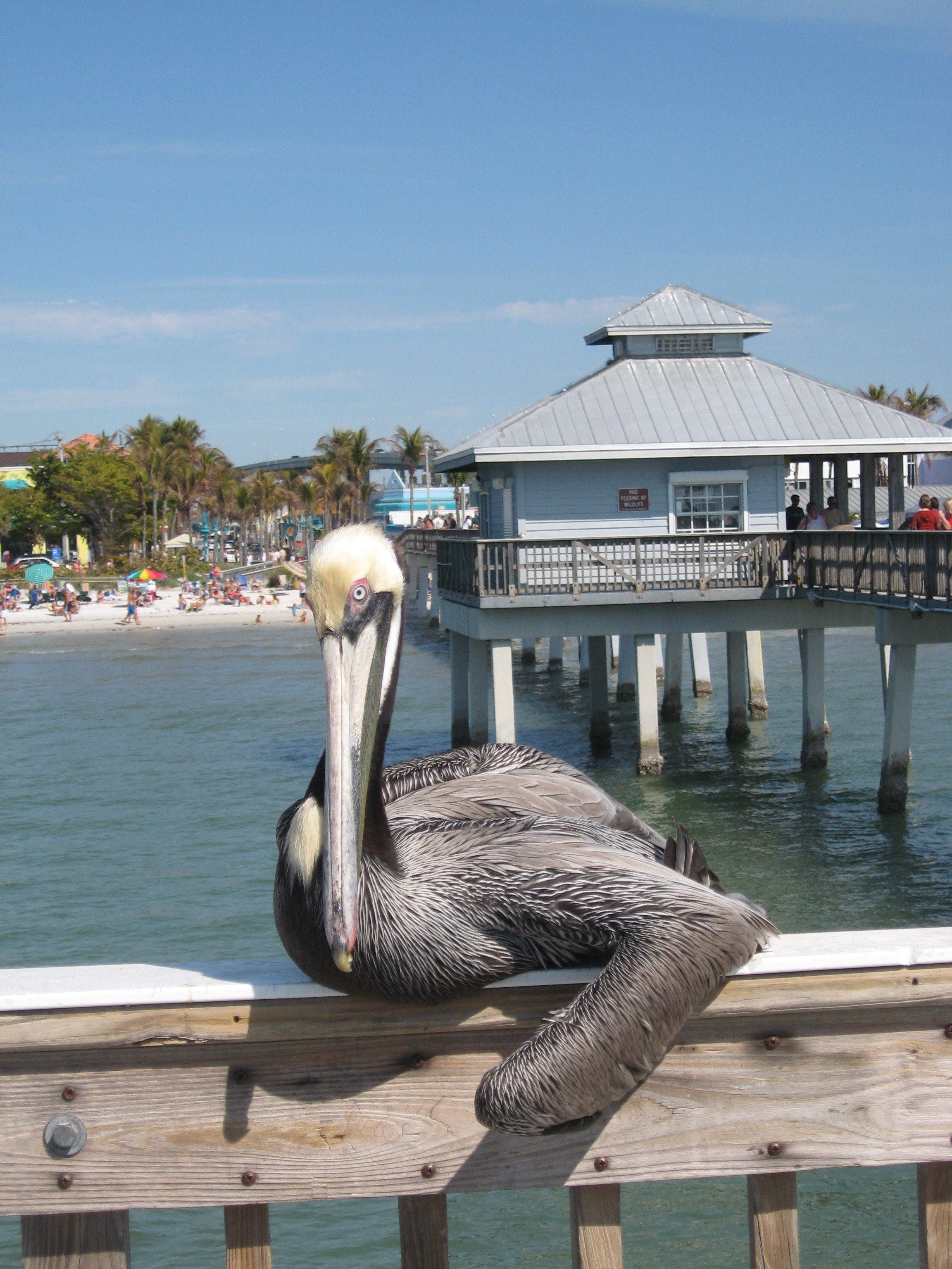 Fort myers beach for Fort myers fishing pier